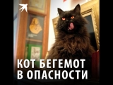 Кот Бегемот в опасности