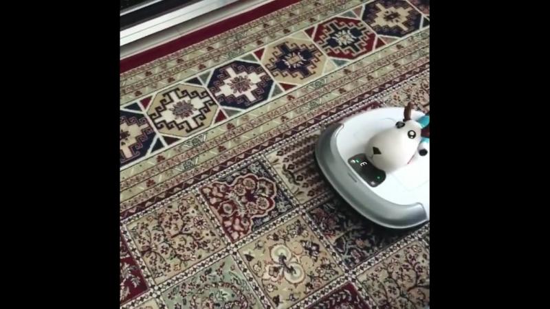 робот пылесос убирает ли ковры