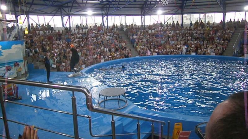 Сочи парк. Шоу с дельфинами Часть 2