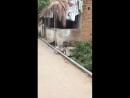 Не обижай обезьян