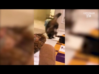 You will LAUGH SO HARD that YOU WILL FAINT - FUNNY CAT compilation.mp4