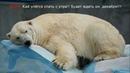 Где то на БЕЛОМ свете в Новосибирском зоопарке БЕЛЫЕ медведи