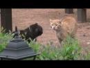 Драка котов смешная озвучка