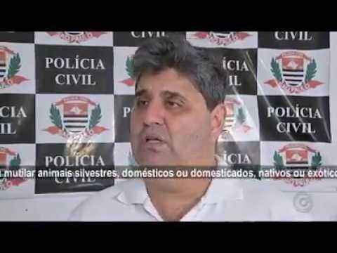 A BRANDURA DAS PENAS REVOLTA A PROTEÇÃO ANIMAL. AcheiC