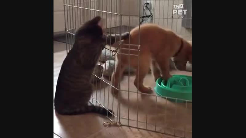 Семейство боевых котиков
