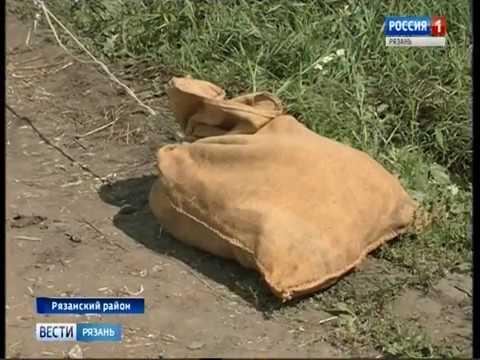 В населенных пунктах Ухоловского и Старожиловского районов объявлен карантин по бешенству