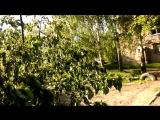 электрический провод и дерево