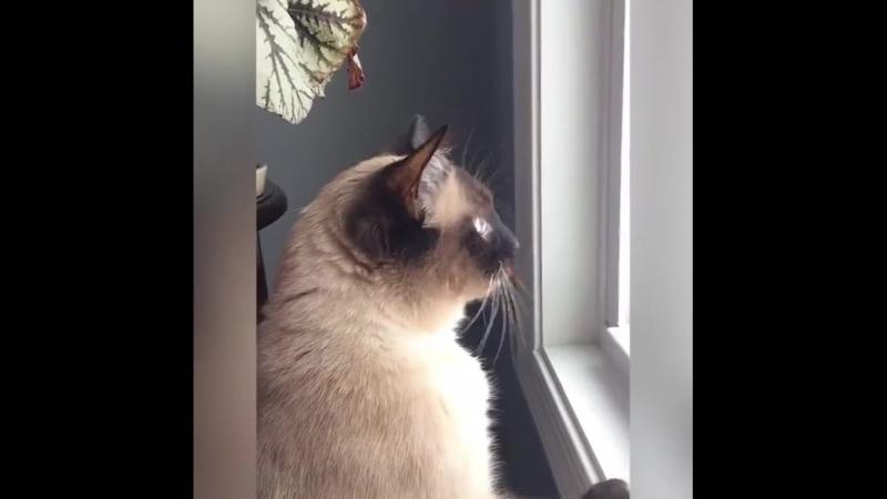 Может быть вы не скучаете по зиме, но зато ваша кошка точно скучает!