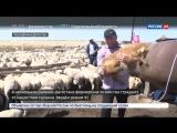 ЧС в Дагестане фермеры пошли войной на саранчу - Россия 24