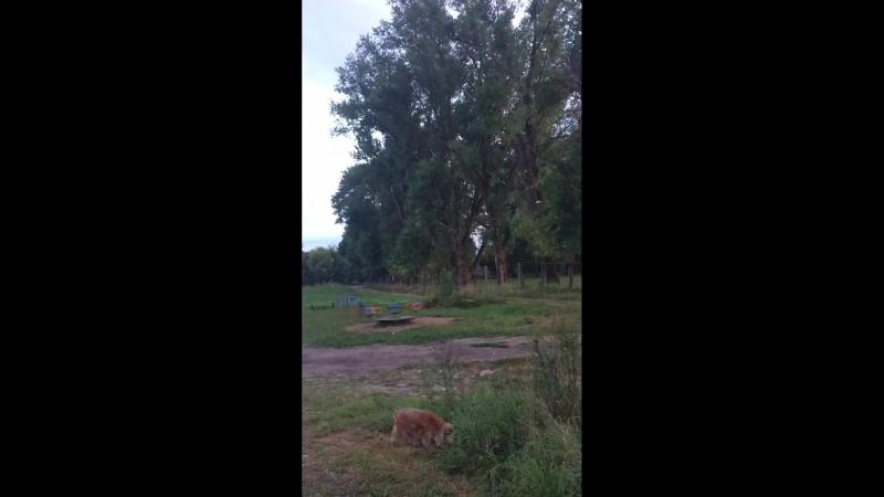 Падают ветки тополя на детскую площадку