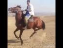 [v-s.mobi]Ошский лошадь танцует под лезгинку.mp4