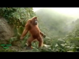 Funny Ape Song. Cartoon Parody. Dance Music Pop Songs. (Dancing Gorilla) Kids Ca.mp4