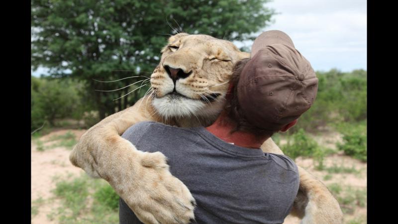Amazing stories about the friendship of people and animals | Удивительные истории о дружбе людей и животных