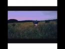 КэтСуперКэт грациозно скачет по травам Беларусии
