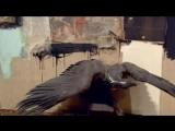 EARLE BROWN - Art:21   Elegy for Robert Rauschenberg