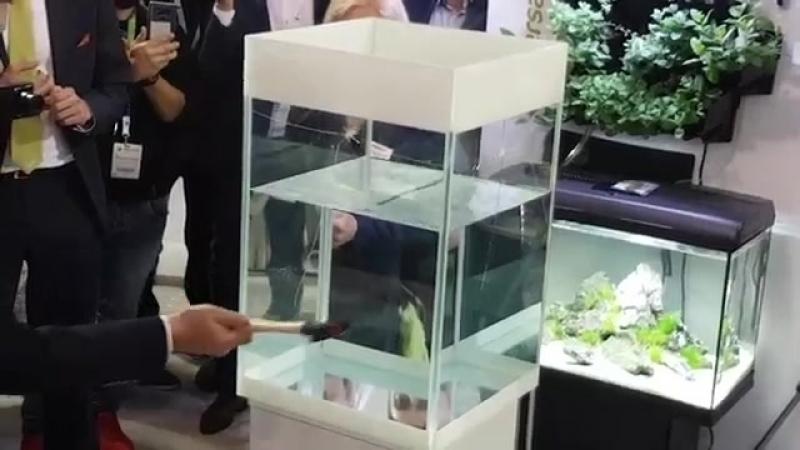 Фирма Акваэль представила систему безопасности аквариума Aquael GLOSSY WHITE Safe System