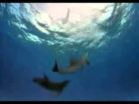 Enigma - el sueño del delfin (The Dream Of the Dolphin)