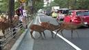 奈良Nara