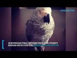 «Свободу попугаям!»_ говорящая птица сбежала от хозяйки в Нахабине - Подмосковье