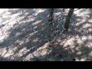 Грибочки в лесу 1