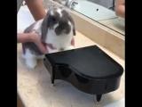 урок игры на пианино
