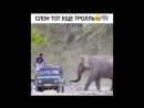 Слон тот еще троль Ахахах Instamusor