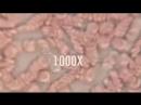 Кровь в сосудистом русле под микроскопом.