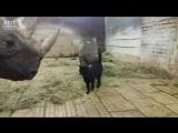 Даже носороги любят котиков