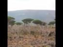 Остров Сокотра Йемена является одним из лучших островов в мире и самым редким и лучшим туристическим островом