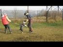 Тренинг по защитному разделу: американский стаффордширский терьер Импала Шевроле Шоу Ассорти'К (2)