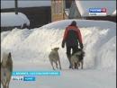 О регулировании численности безнадзорных животных в Сысольском районе