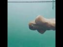 um den Hund beim Schwimmen zu beobachten ....