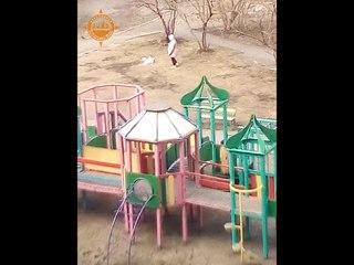 Выгул собаки на детской площадке в Солнечном