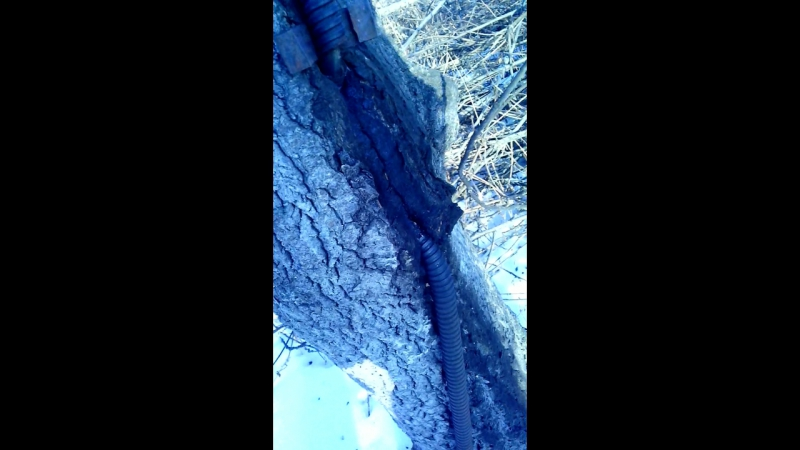 Дерево съело кабель, борьба за выживание.