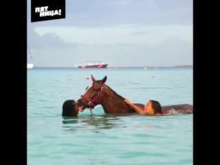 Орел и Решка. Рай и Ад. Плавание с лошадьми