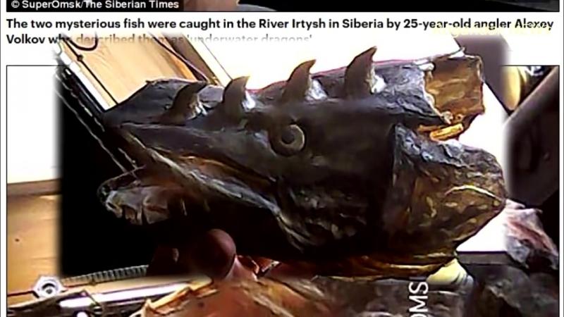 «Подводные драконы» из Омской области шокировали британцев