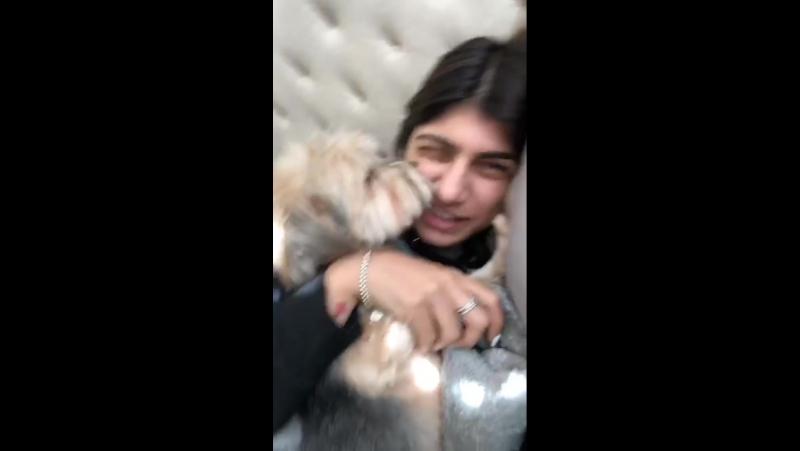 Mia Khalifa и её собаки