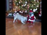 А ты точно настоящий Дед Мороз??  😂😂😂  Чудес в Новом году!! 🎄
