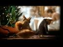 Все заставки с белками в виде Рекламы на Первом Канале (15.12.2017-15.01.2018).mp4