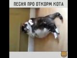Песенка про любимых котиков и правильности их питания, с юмором