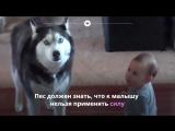 Как правильно воспитать и выдрессировать собаку?