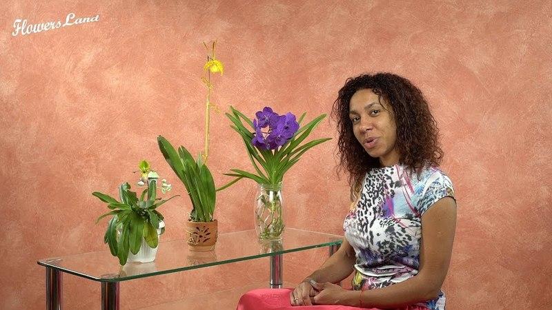 Коллекция орхидей Фатимы Часть 1