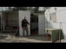 Сука-судьба — Русский трейлер (2017)