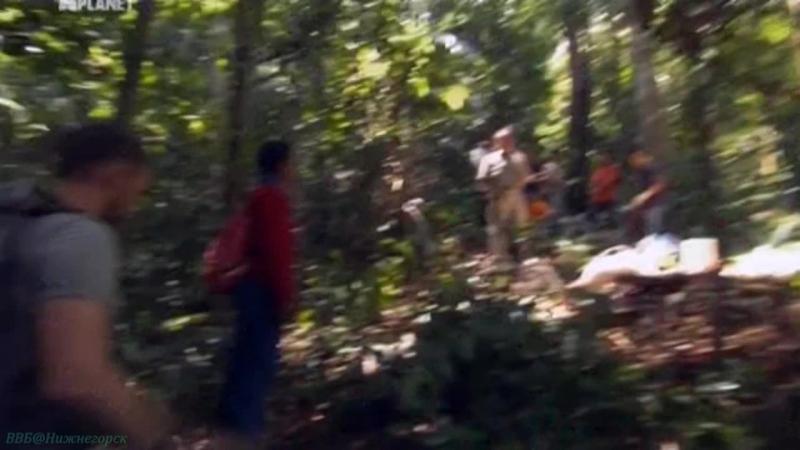 «Доминик Монаган и дикие существа (07). Гигантские медоносные пчёлы (Малайзия)» (Познавательный, природа, 2012)