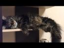 Дембельский поезд 2 Или как спит мой кот