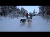 Часть 2. Тренировка собак с друзьями из Нефтеюганска. Еженедельная тренировка. Ездовой спорт. ХАСКИ 186.