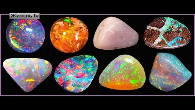 Камни – особая форма жизни на Земле. Живые камни.