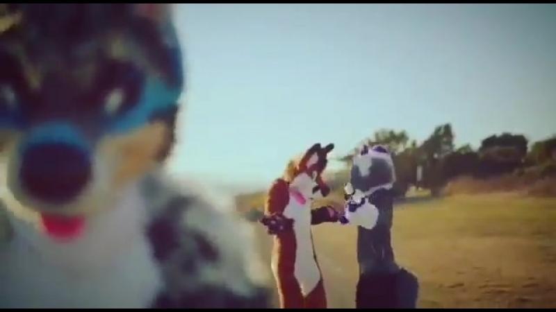 Furry Distracted Boyfriend [fursuit]