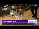 Собачникам - бой. В Петербурге разыскивают мужчину, который нападает на владельцев собак