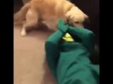 Парень сделал живую копию любимой игрушки своего пса))))